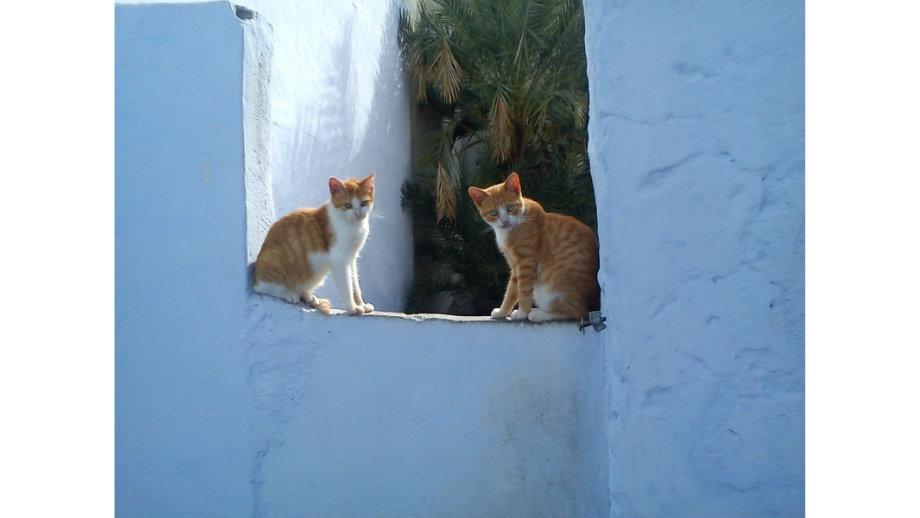 Wspomnienia z Tunezji